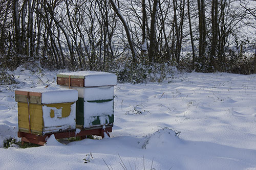 Hives in the snow in Leicestershire